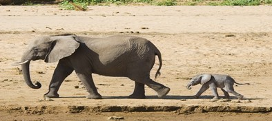 Botswana Delta del Okavango y Cataratas Victoria