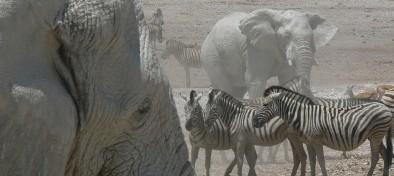 Namibia Overland y Cataratas Epupa en español en grupo privado