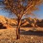 Egipto y Desierto Blanco