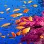 Jordania y estancia en Mar Rojo
