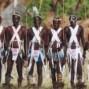 Camerun Tierras altas y Jungla Sur