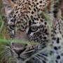 Minisafari Serengeti y Zanzíbar