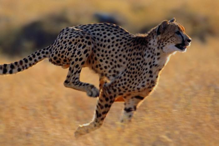 Especial Safaris África
