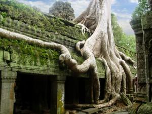 Piedra y árboles se funden en el templo de Ta Prohm.