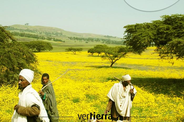 Viajar a Etiopía: la fiesta de Enkutatash, el año nuevo etíope
