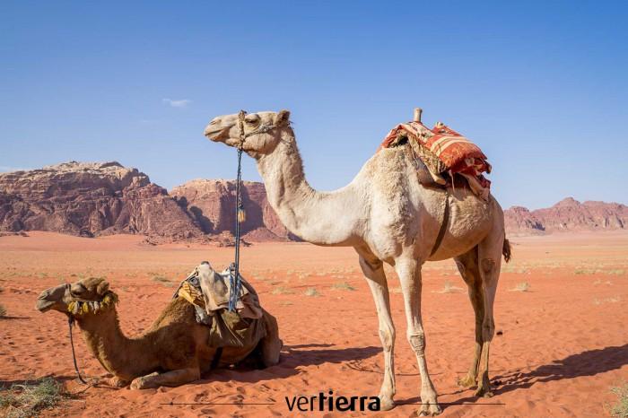 Mil y una razones para viajar a Jordania