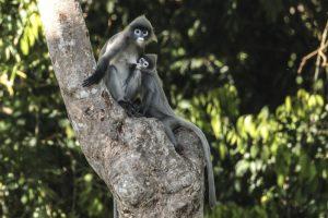 Viajar a Laos_-la iniciativa Gibbon