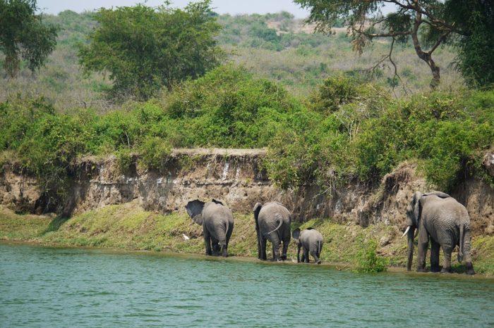 ¿Es buena idea hacer un safari con niños?